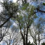 A woodland canopy in Ferbane