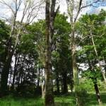 Ballylin amenity woodland